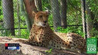 El Naples Zoo organiza el Safari Squad, una actividad divertida para los mas pequeños