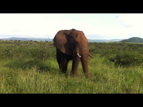 Elephant encounter in South Africa