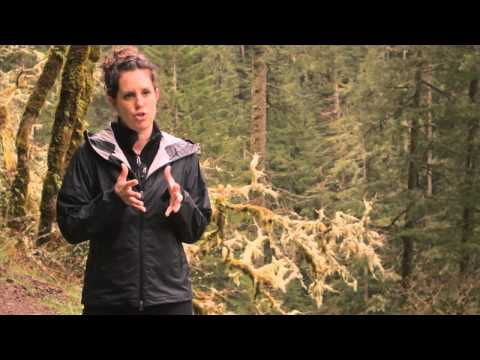 Video: Men's Proterra Sport Hiking Shoes