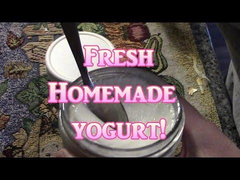 Make Yogurt In A Cooler!