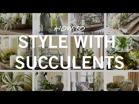 How to Style with Succulents