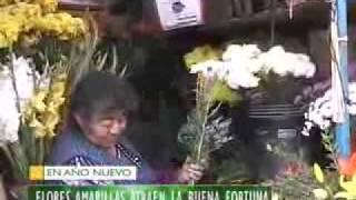 FLORES AMARILLAS ATRAEN LA BUENA FORTUNA