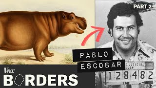 How this drug lord created a hippo problem in Colombia width=