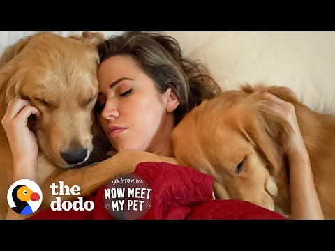 Bachelor Couple Keeps Adopting Golden Retrievers From Korea   The Dodo You Know Me Now Meet My Pet