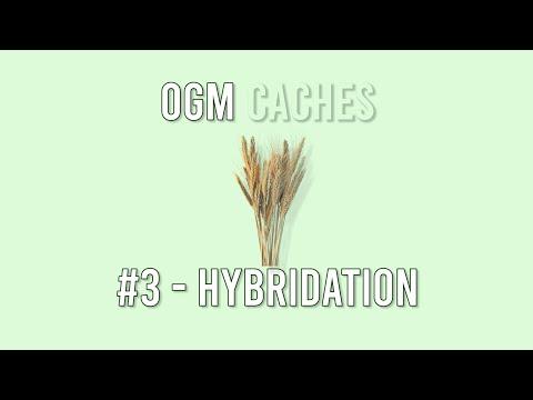 OGM Cachés - 3 : Hybridation