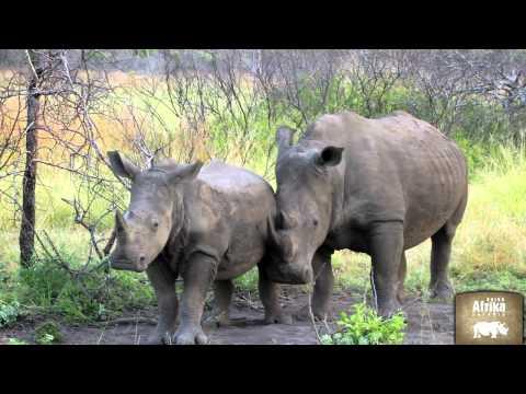 Die faszinierenden 3: Kapstadt, Krüger & Viktoria Fälle mit Rhino Afrika