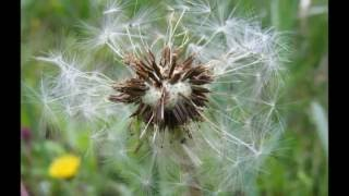 Tavaszi szél vizet áraszt - Ferencz Orsolya
