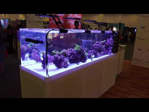 Amazing reef  tank check this out !!!!!