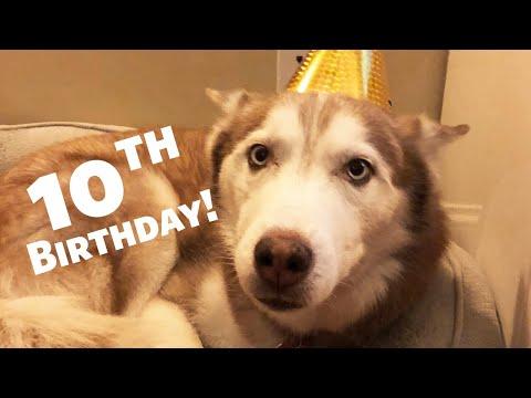 Happy 10th Birthday Laika the Talking Husky!