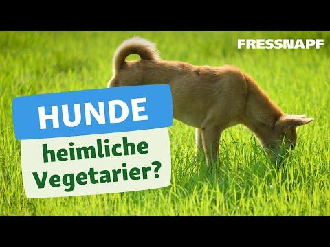 Warum fressen Hunde manchmal Gras?