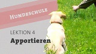 Hund Apportieren beibringen Teil 1