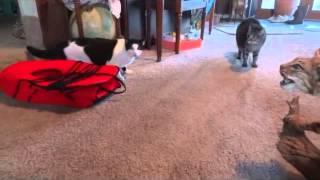 Quattro gatti, un cane e una lince imbalsamata! Divertentissimo!