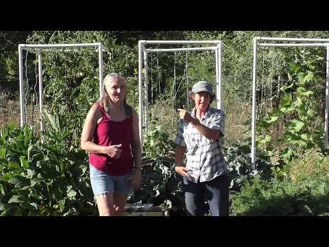 Adventures in High Performance Gardening | Week 26