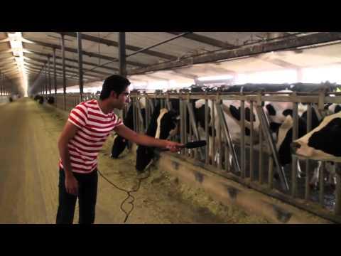La Yekthar Show: Extended Cow Report برنامج لا يكثر: تقرير البقر