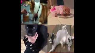 Funny Cats - Funny Cat Videos - Funny Animals