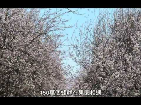 4/26【蜜蜂工場】愛因斯坦:「如果蜜蜂消失,人類四年後隨之滅絕。」 - YouTube