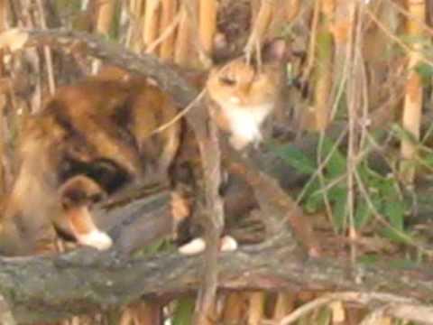 MVI 5090 tortoiseshell kitty in trees wild evening
