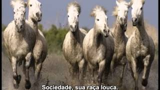 Eddie Vedder - Society legendado (pt-br)