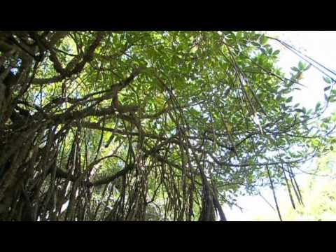 The Sundarbans(Bangladesh)