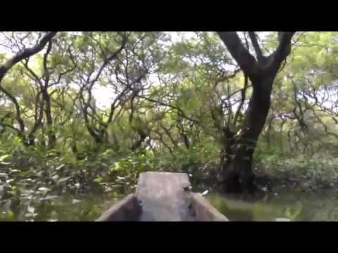 রাতারগুল জলাবন [Ratargul Swamp, Sylhet, Bangladesh]