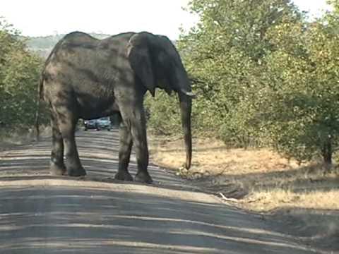 Kruger Park (05-06-09) Part II