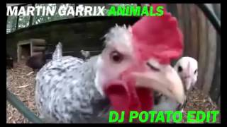 los animales tambien hacen la musica electronica