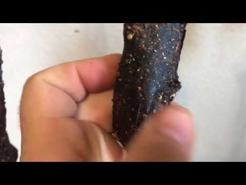 Biltong Hanging Update Day Two