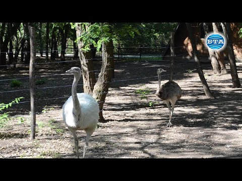 BTA: Двойка нанду са новите обитатели на зоопарка в Добрич