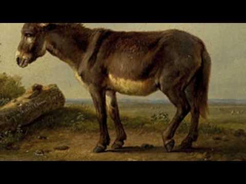 野驢(動物狂歡節)