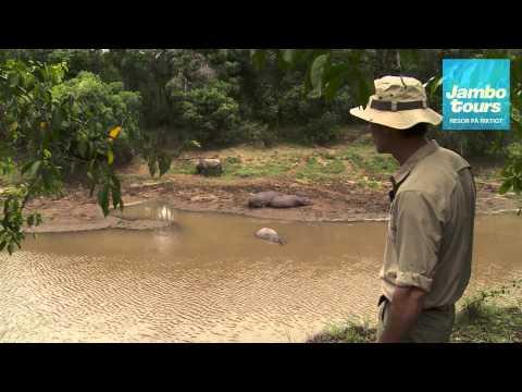 Flodhästar - Jambo Tours