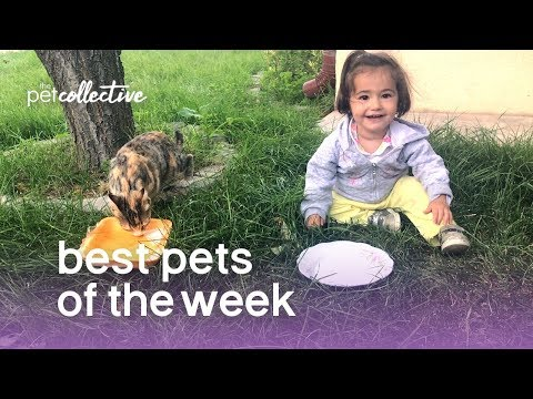 Best Pets of the Week - COPY CATS | The Pet Collective