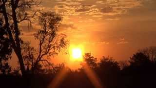 O canto do jaó, Sons do entardecer na fazenda, Crypturellus undulatus,