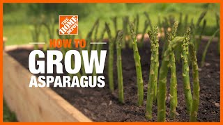 Video showing how to plant and grow asparagus.