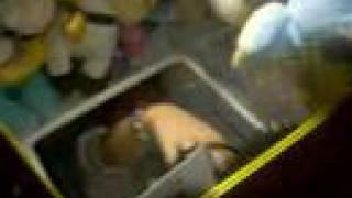 girl hacks the stuffed animal machine