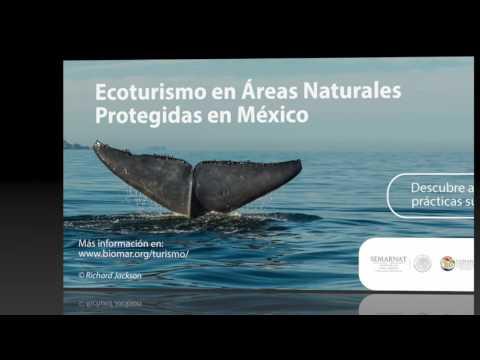 Observacion de Ballenas con VM EcoTours Teacapan Mexico