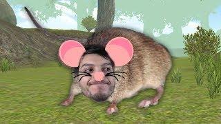 Simulador de Rata.