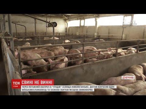 Через потужний обстріл селища Новолуганське збитків зазнала місцева свиноферма