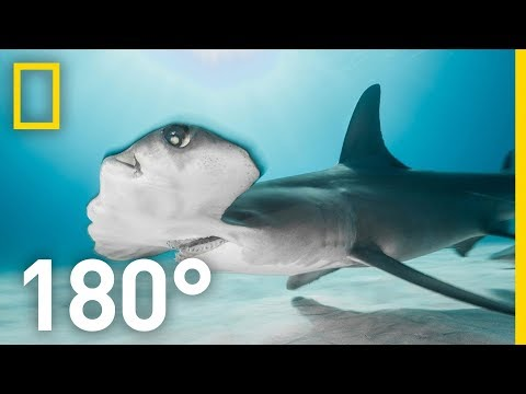 Shark Encounter in 180: Worth More Alive | National Geographic