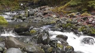 ALEXANDRE DESPLAT - RIVER - THE TREE Of LIFE - SOUNDTRACK