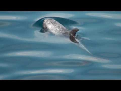 海豚的圈圈 ( 3分鐘精華篇 ) - YouTube