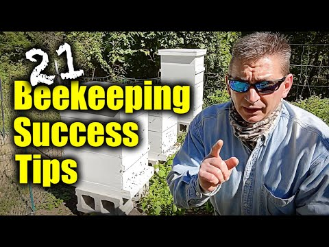 BeeKeeping For Beginners - 21 Success Tips From Inside The Hive