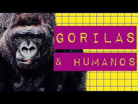GORILAS & HUMANOS