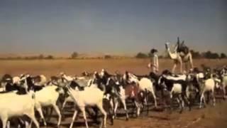 Teaser - Les Mille et Une Cuites - Bande Annonce Officielle