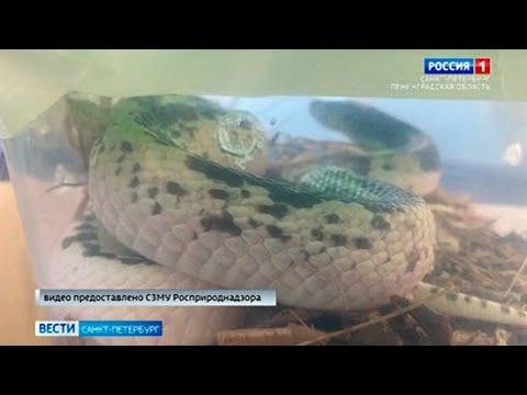 Вести Санкт-Петербург. Выпуск 9:00 от 10.06.2021