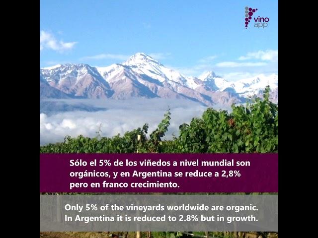 Argentine Organic Wine