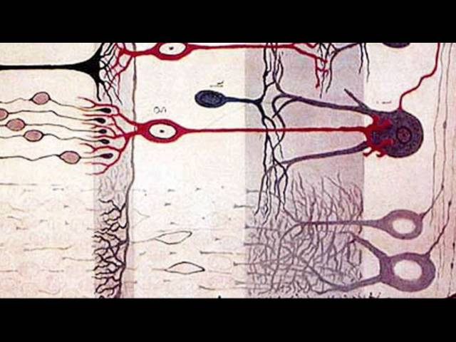 The Ascent: A Brief History of the Brain