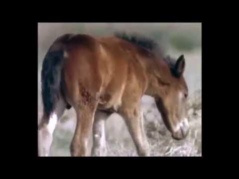 Doğada Atlar Bölüm 2[Türkçe Belgesel]