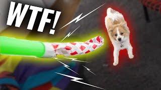 Mein Hund FLASH vs. die TRÖTE 😂