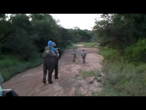 Camp Jabulani elephant stroll