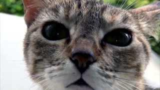Atirei o pau no gato | Fábio Caramuru | Beth Bento